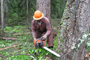 Logging and Chainsaw Safety, PS4 eLesson